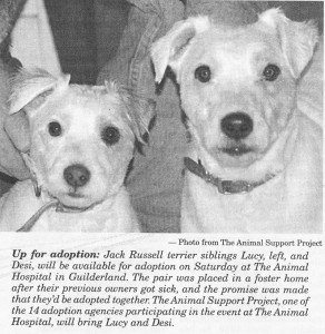 Altamont Enterprise article image of 2 dogs