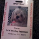 Brittany The Service Dog