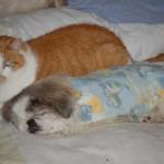 Louis Comforts Tuti