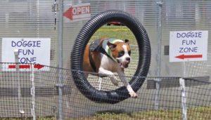 Mountain Top Dog Day @ C.D. Lane Park | Windham | New York | United States
